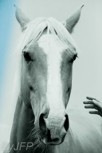 portraits-CHEVAL